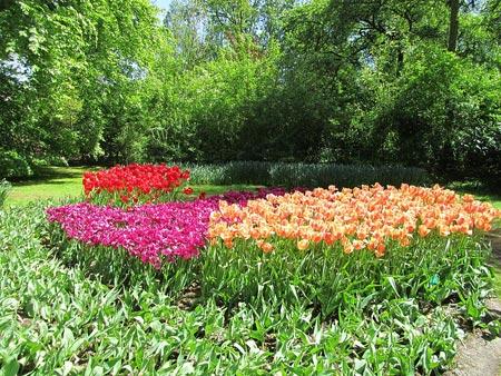 کوکنهوف یکی از پارکهای دیدنی کشور هلند تصاویر