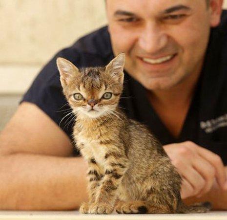چهره متفاوت اولین گربه مبتلاء به سندروم داون
