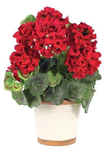 بهترین گل ها بای آپارتمان/ به راحتی در آپارتمان کوچک گل پرورش دهید تصاویر