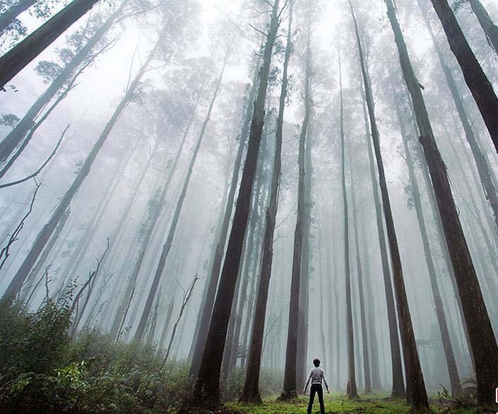 اگر در سفر طبیعت گردی گم شدید این کارها را انجام بدهید
