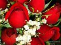 rose-persianv_(397).jpg