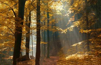 شهریار و شعر زیبایی درباره پاییز