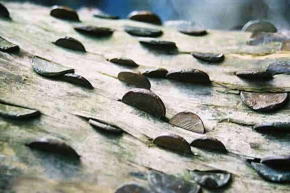درخت آرزوها را از نزدیک ببینید