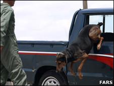 سگ درمانی و کتک درمانی برای ترک معتادان! عکس