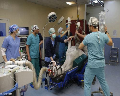 در بیمارستان اسب ها چه میگذرد