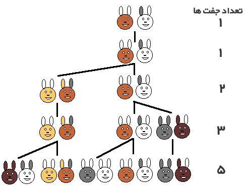 معمای جالب شمار خرگوش ها بعد از یک سال