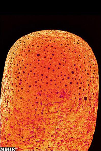 تصاویر جالب لوازم خانه از نگاه گرانترین میکروسکوپ دنیا
