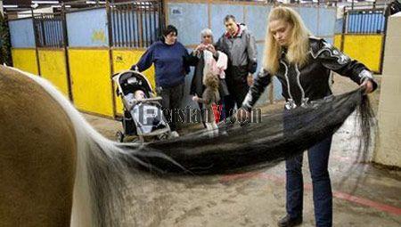 تصاویری از اسبی با بلندترین دم در دنیا