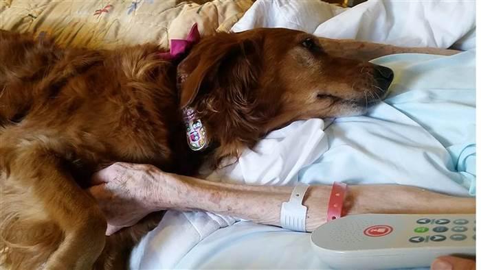 سوگواری سگ برای یک بیمار