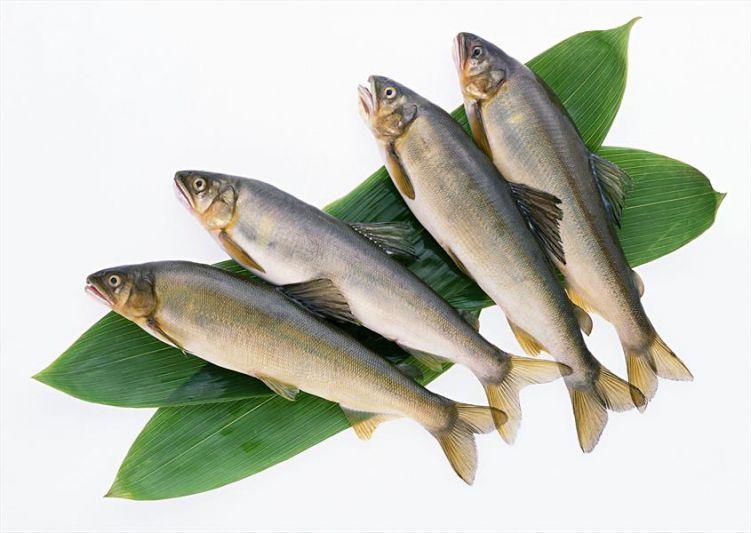 خوردن ماهی در بارداری چه تاثیراتی بر روی جنین میگذارد؟