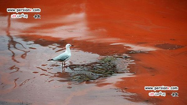 تصاویر دیدنی از دریاچه خون در استرالیا