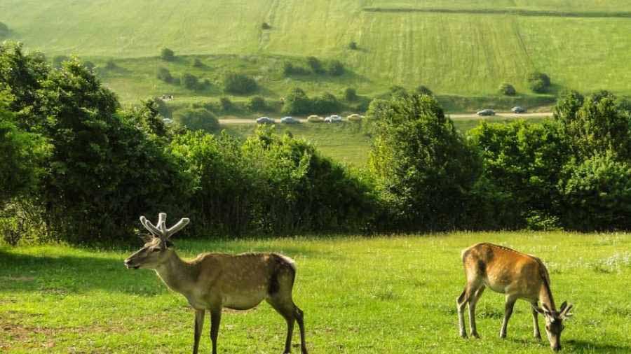 جنگل فندقلوی ,جنگلی بکر و زیبا که طبیعتی بسیار زیبا و جذاب دارد