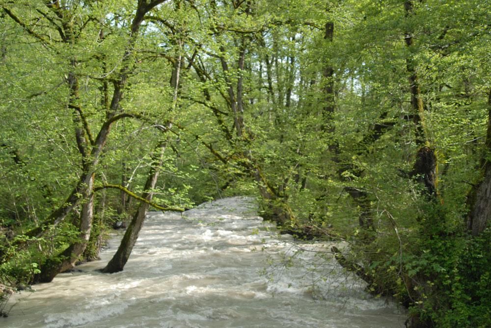 پارک جنگلی چالدره را بیشتر بشناسید