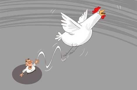 انقراض مرغ