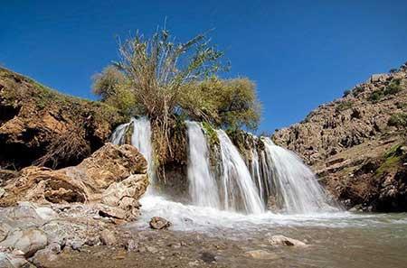 به تماشای بهاری زیبا و دل انگیز درخوزستان بروید تصاویر