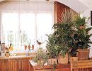 آیا تا به حال گیاهی سبز برای آشپزخانهتان خریدهاید؟!