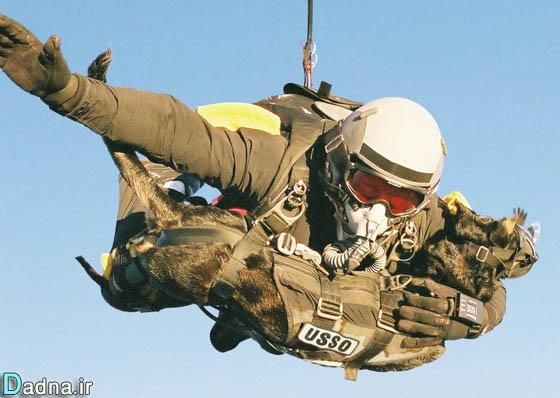 نقش سگهای جنگی در ارتش آمریکا و حمله به خانه بن لادن عکس
