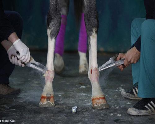 در بیمارستان اسبها چه میگذرد؟