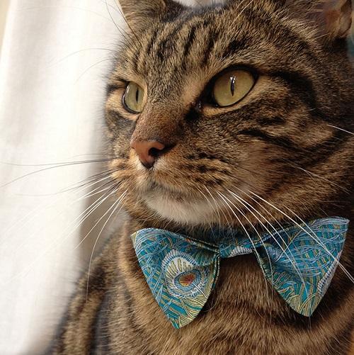 گردنبند برای گربه