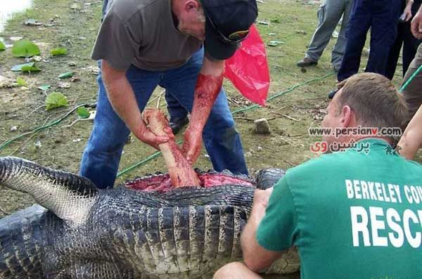 عکس های دیدنی:مرد یونانی دست خودشو تو دهن تمساح جا گذاشت