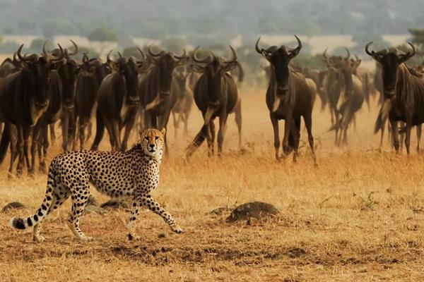 عجیب و دیدنی از حیات وحش