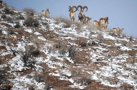پارک ملی گلستان ، قدیمیترین پارک ملی ثبت شده در کشور ایران تصاویر