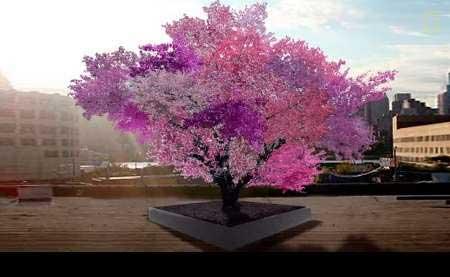 تصویر جالب به شکوفه نشستن درخت 40 میوه