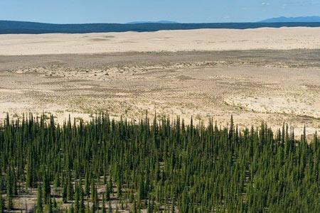 کویر در وسط جنگل های سردسیر آلاسکا تصاویر