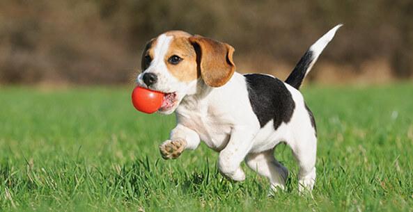 سگ را چگونه میشود آموزش داد؟/چه چیزهایی برای سگ ضروریست؟