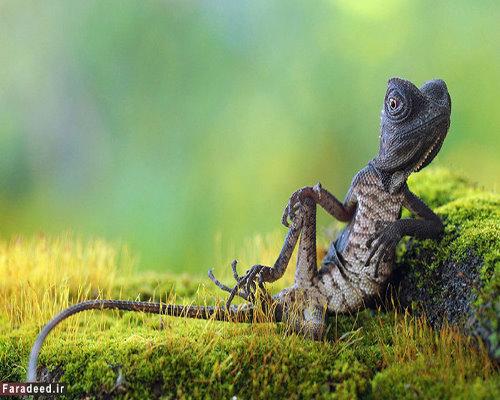 تصاویر باورنکردنی از دنیای حیوانات که تا به حال ندیده اید
