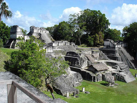 جنگل اسرارآمیز تیکال در گواتمالا  تصاویر