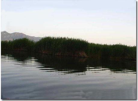 دریاچه زریوار مریوان تصاویر