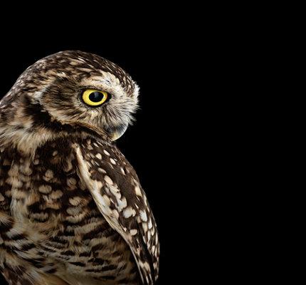 اکشتاف زیبایی های این پرنده